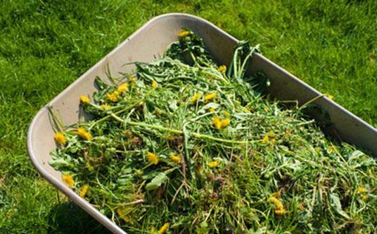 Abfallbeispiel für Gartenabfall